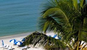 Beach Palm Sand
