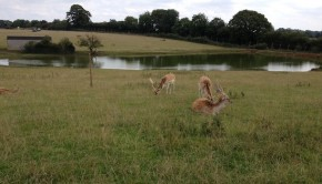 Whipsnade Zoo Passage Way