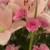 Flower bouquet pink