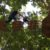 Go Ape Chessington Tree Top Adventure Junior