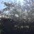 Bocketts Farm Park Spring Countryside