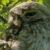 Owl Richmond Park