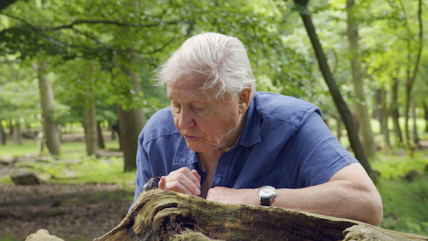 Richmond Park Sir David Attenborough